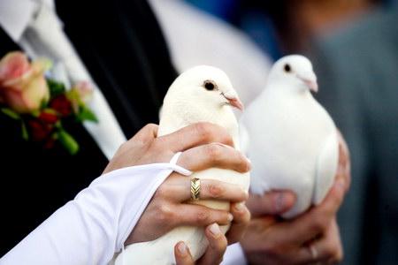весільні голуби